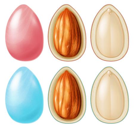 Almond nut dragees. Vector illustration.