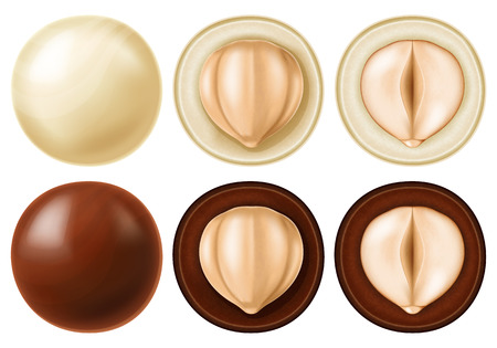 Hazelnut dragees in dark and white chocolate. Vector illustration.