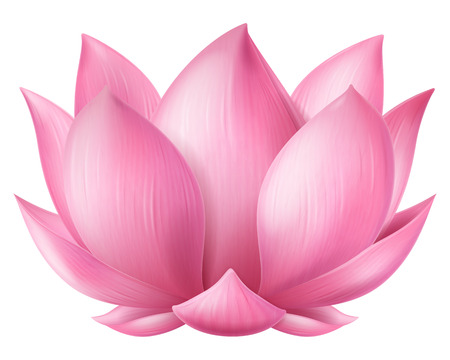 Pink lotus flower. Vector illustration. 스톡 콘텐츠 - 119521283