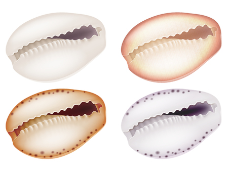 Set of seashells. Vector illustration. Illustration
