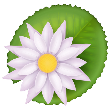 Pink lotus flower and green leaf. Vector illustration.