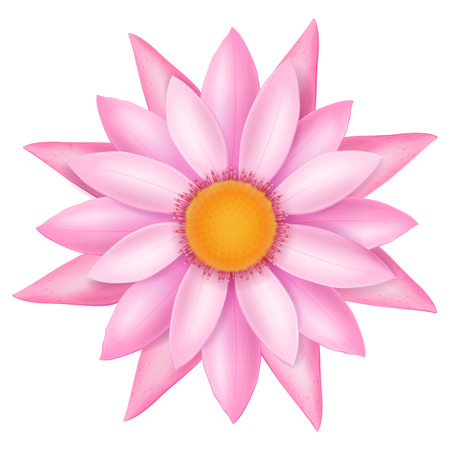 Pink lotus flower. Vector illustration. Иллюстрация