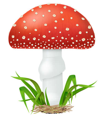 Amanita muscaria or fly agaric mushroom with green grass isolated on white background. Vector illustration. Illustration