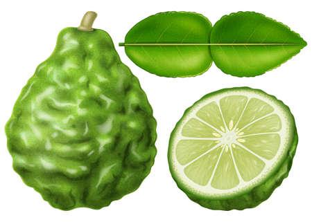 Kaffir lime or makrut lime isolated on white background. Photo-realistic vector illustration. Vector Illustratie