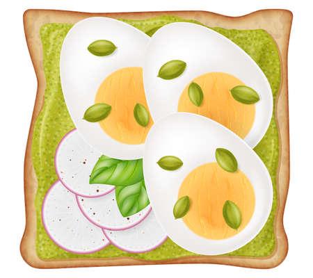 Toast with avocado cream, cutting boiled egg, sliced radish, pumpkin seeds and fresh oregano leaves isolated on white background. Photo-realistic vector illustration.