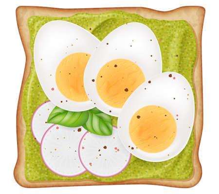 Toast with avocado cream, cutting boiled egg, sliced radish and fresh oregano leaves isolated on white background. Photo-realistic vector illustration.