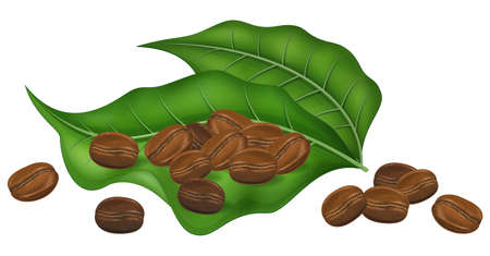 Roasted coffee beans with fresh coffee tree leaves isolated on white background. Photo-realistic vector illustration.