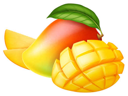 Fresh ripe mango: whole, half and slices isolated on white background. Photo-realistic vector illustration.