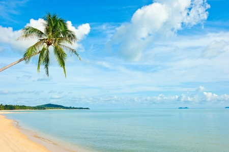 anse: Tropical beach at Seychelles - vacation background