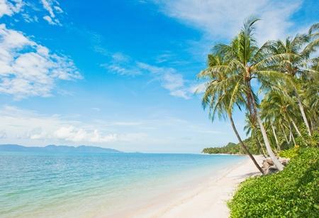 beach hut: Beautiful tropical beach with coconut palm