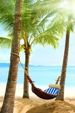 Holidays. Empty hammock between palm trees
