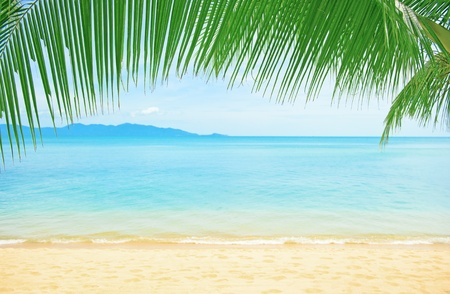 palm fruits: Beautiful beach with palm tree Stock Photo