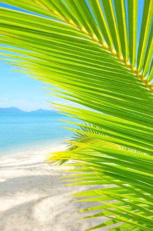 coconut leaf: Holidays Background. Beautiful tropical beach with palm tree and sand Stock Photo
