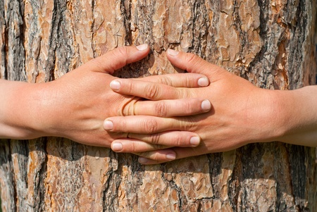 naturalist: Abstract Nature. Arms wrapped around a tree