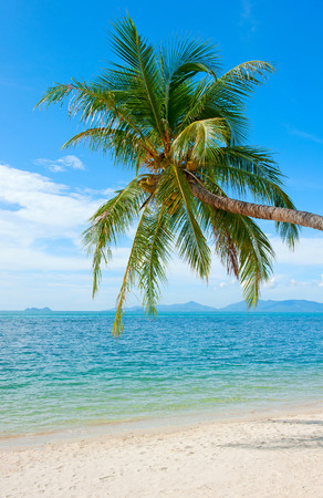 Coconut Palm tree on the sandy beach Stock Photo