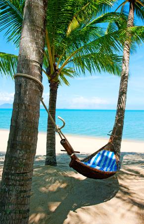hammock: Empty hammock between palms trees at sandy beach