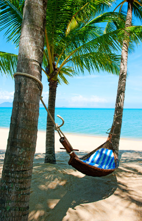 hammock: Hamaca vac�a entre palmeras en la playa de arena