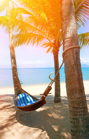 puttering: Empty hammock between palms trees at sandy beach