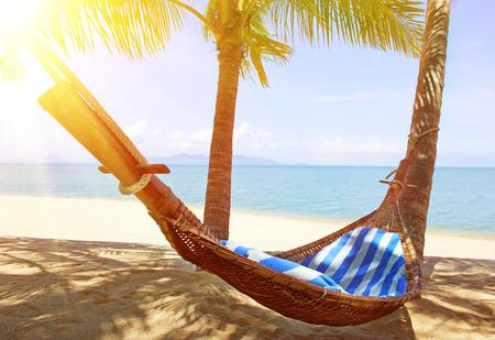 idyllic: Idyllic beach with coconut trees and hammock