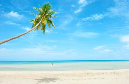 noix de coco: Plage avec palmier sur le sable Banque d'images