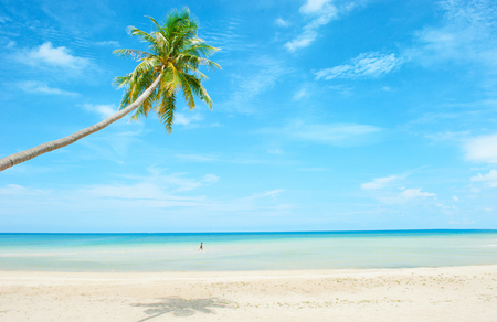 Strand met palm over het zand Stockfoto