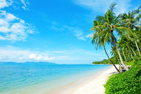 hojas de arbol: Playa con la palmera sobre la arena Foto de archivo
