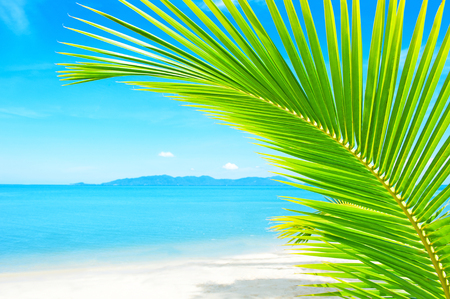 tropical tree: Holidays Background. Beautiful tropical beach with palm tree and sand Stock Photo
