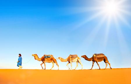 desierto del sahara: caravana de camellos en el desierto del Sahara. el desierto de Marruecos del Sahara
