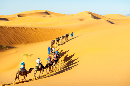 Caravan with bedouins and camels in sand dunes in desert at sunset. Morocco Sahara desert