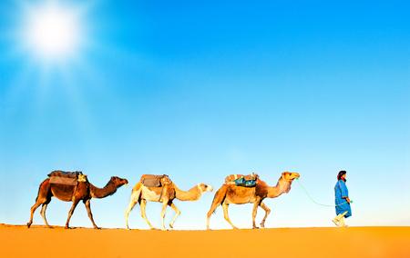 Kamel Karawane werde durch die Sanddünen in der Sahara Wüste, Marokko. Standard-Bild - 53749866