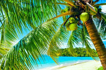 white sand beach: Empty hammock between palms trees at sandy beach