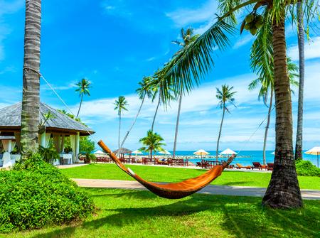hammock: Hamaca vac�a entre las palmeras. concepto de las vacaciones