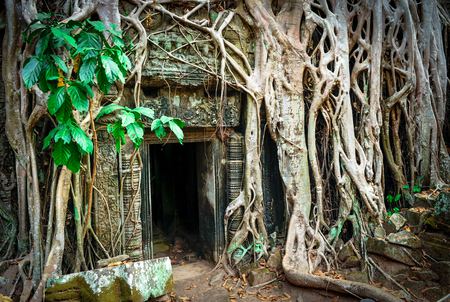 archaeology: Ta Prohm Temple, Angkor, Cambodia. Ancient archaeology