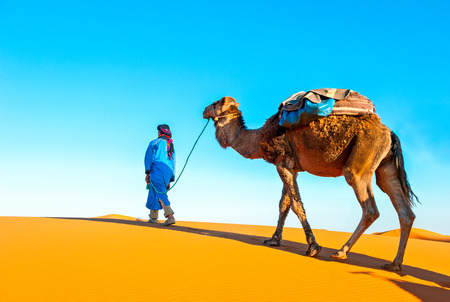 Camel caravan on the Sahara. Africa, Marocco
