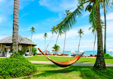 ocean plants: Holidays background. Empty hammock between palm trees