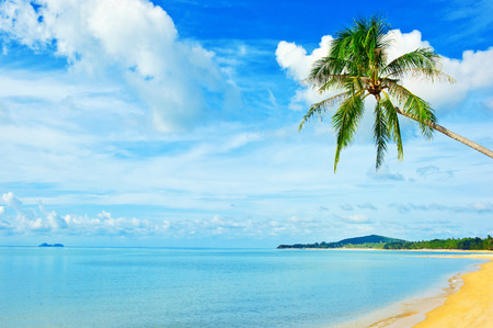 bahama: Beautiful beach. View of nice tropical beach with palms around. Holiday and vacation concept. Tropical beach. Beautiful tropical island.