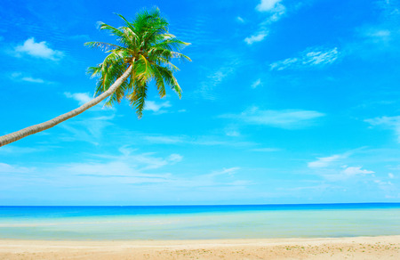 bahama: Beautiful beach. View of nice tropical beach with palms around. Holiday and vacation concept.  Tropical beach.