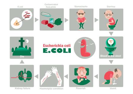 환자의 증상 Escherichia coli illustration.