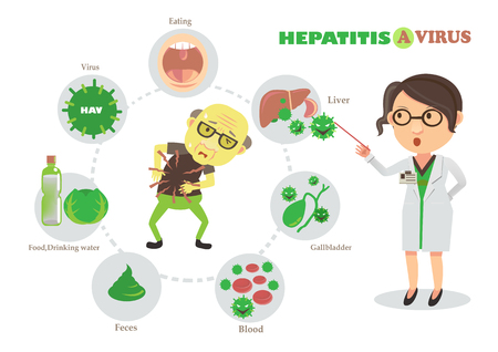 Hepatitis a virus vector illustration