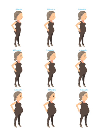 stages of changes in a womans body in pregnancy. Vector illustration
