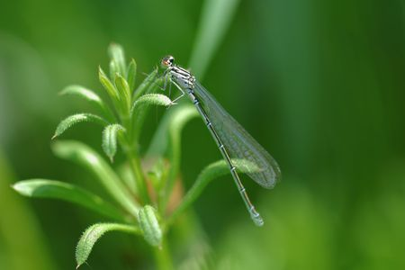 dragon-fly photo
