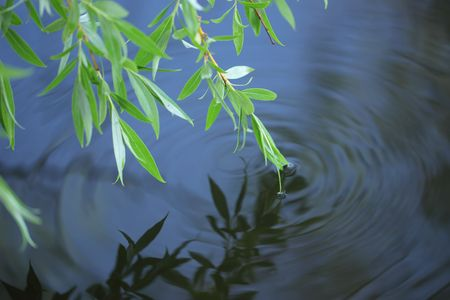 flowing river: a willow is in water Stock Photo