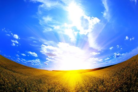 field and sun photo