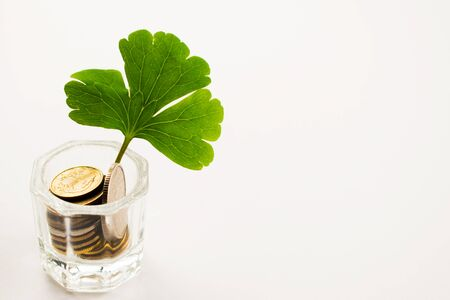 A clover petal grows from a pot of money. Money tree on a white table. Stok Fotoğraf