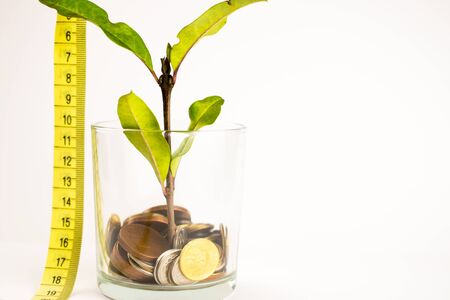 green plant grows from a pot of coins. Growing business investment.