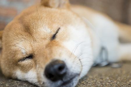 fidelidad: perros durmiendo
