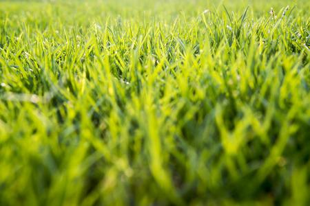 leisurely: grass