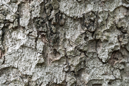 Pattern of tree bark