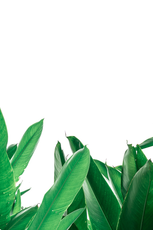 흰색 배경에 잎 스톡 콘텐츠 - 96312554