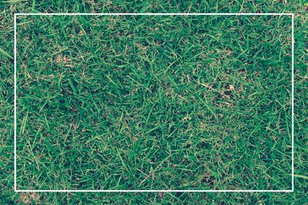 녹색 나뭇잎과 흰색 프레임 스톡 콘텐츠 - 96316471
